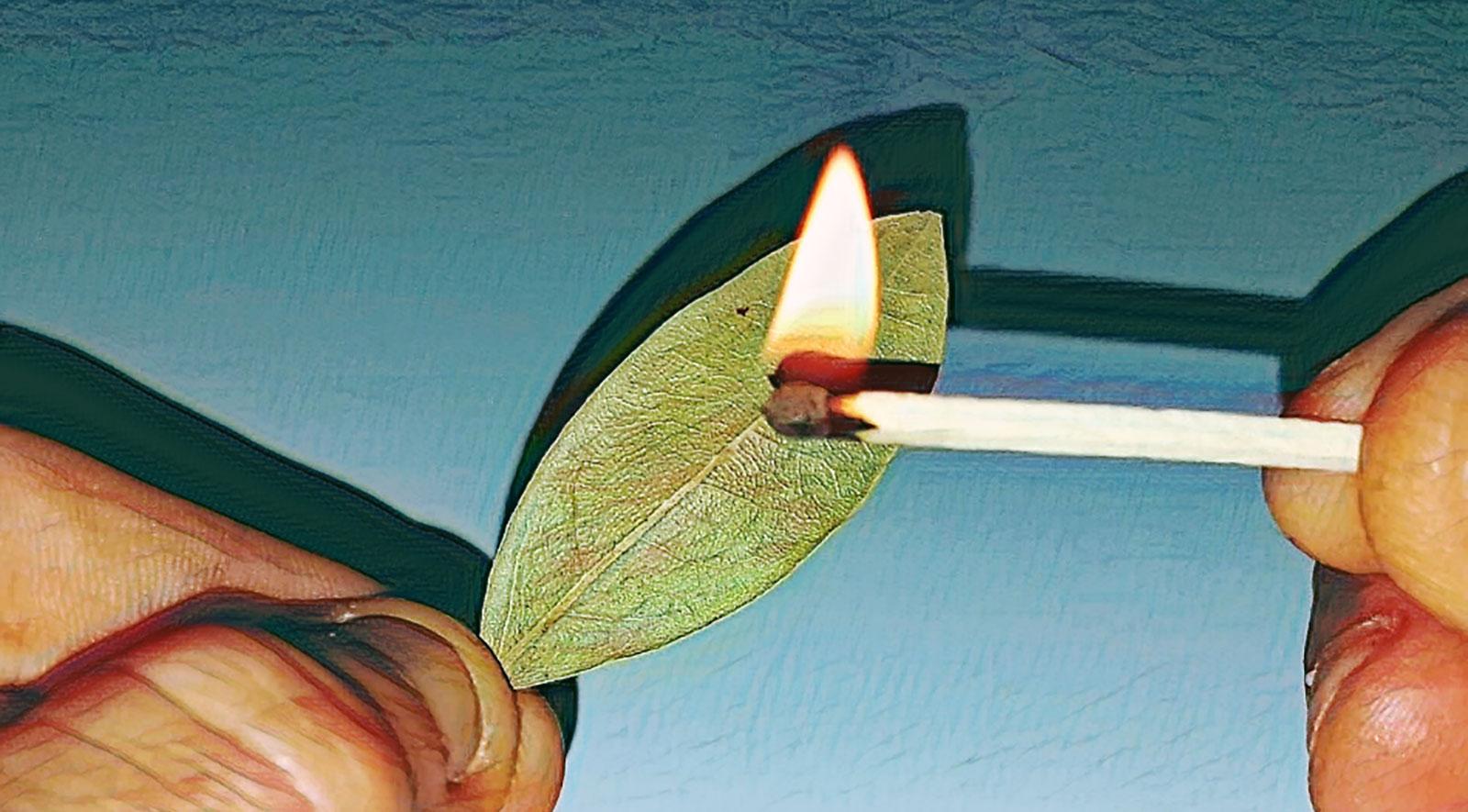 Lorbeerblätter verbrennen