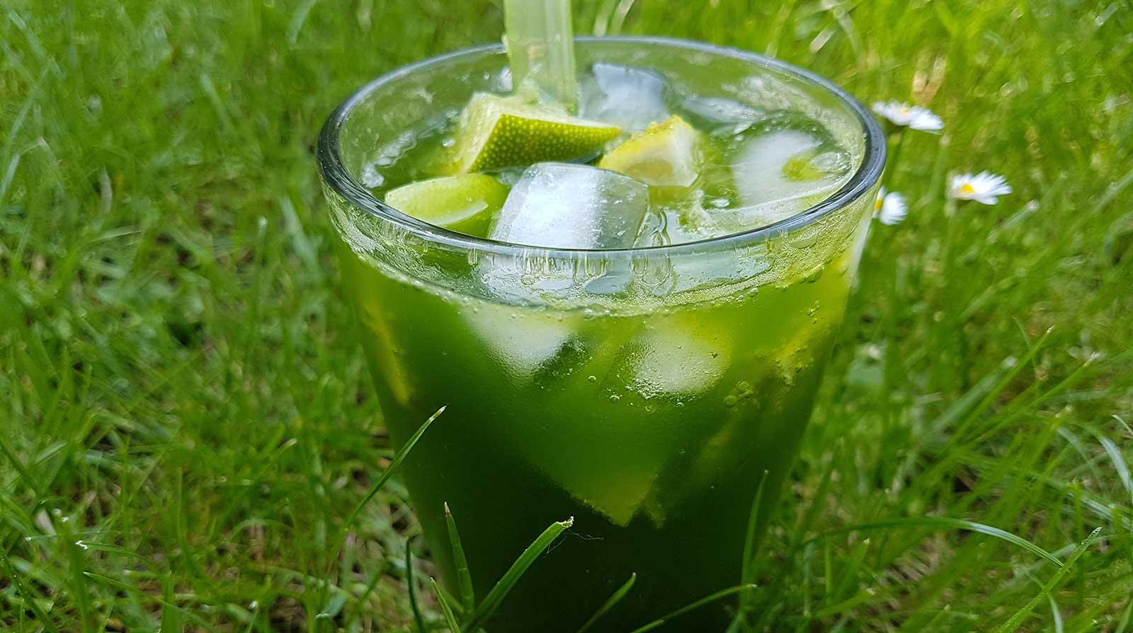 Weizengras Getränk